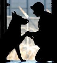 ADA Service Animals