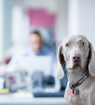 Can Fido Come to Work?