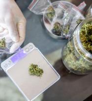 Cannabis Companies and Compliance Lawyers
