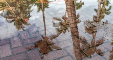 Climate Change Impact on Florida Real Estate