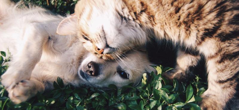 Elder Law - Pets Estate Plan