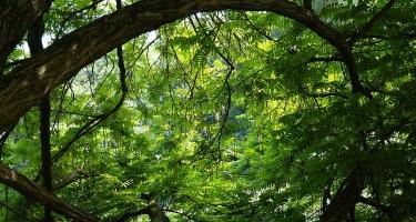 Environmental Impact Bonds