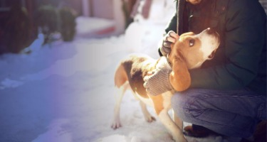 Pet Custody in Divorces