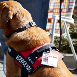 Must Landlords Allow Service Animals?