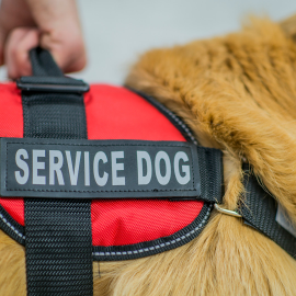 What Is the Difference Between a Service Animal and Emotional Support Animal?